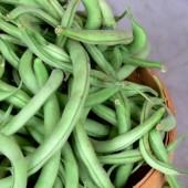 Green Beans Basket   (Approx. 6#)