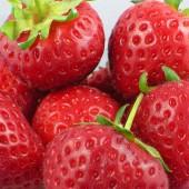 Fruit Lover's Share